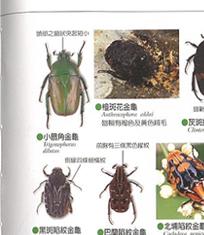 office 繁體 中文 版